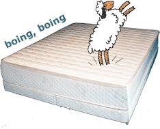 Sheep Jumping on Latex Mattress