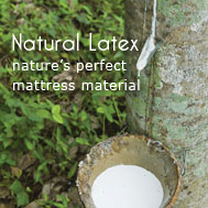 Combined with Organic Cotton and Organic Wool... our Natural Latex Mattress is as clean as it gets!